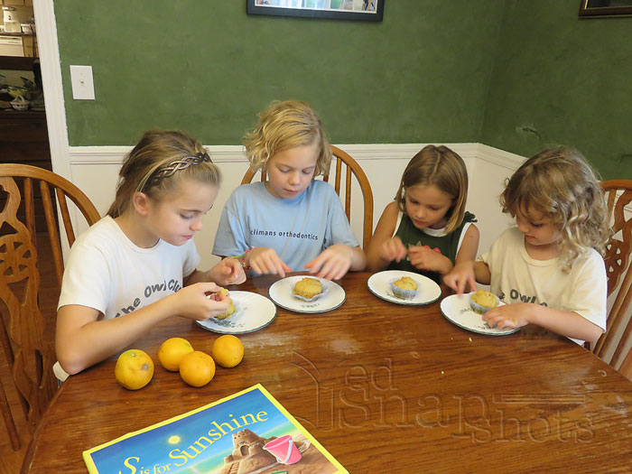 Eight for Each State Florida Us Geography Study Muffins